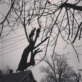 precarious 1