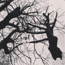 precarious 2