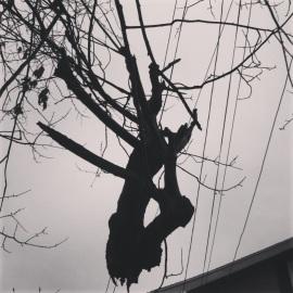 precarious 4