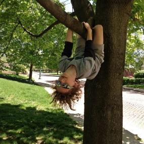 monkey hang