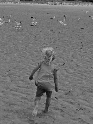 molly bird chase bw