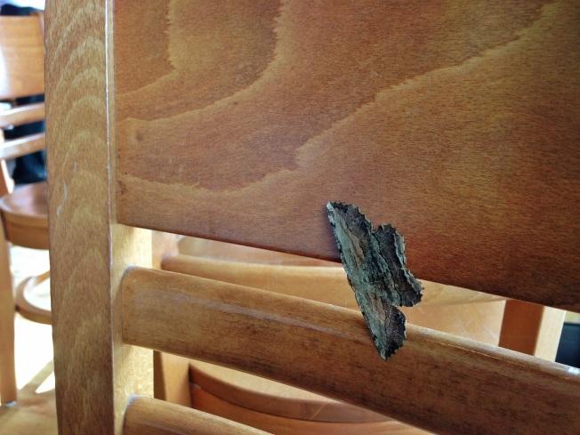 moth across the way
