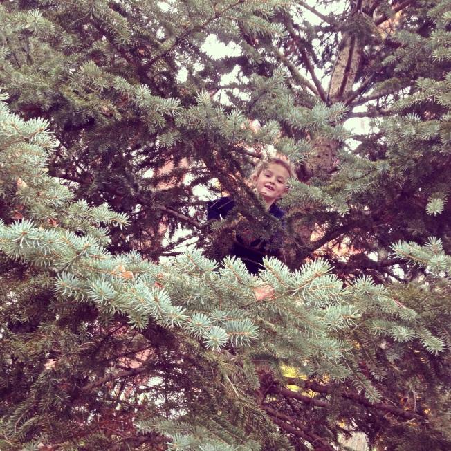 g pine