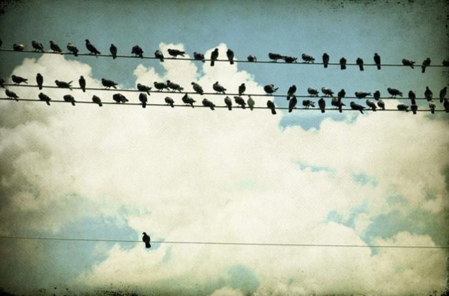 wabi sabi birds by tricia mckellar